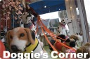 doggiesspot_lgimg